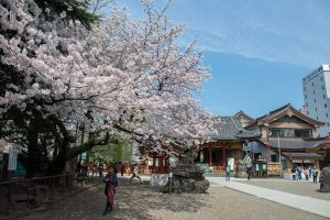春の浅草寺